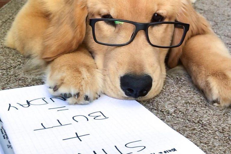 cute dog accounts