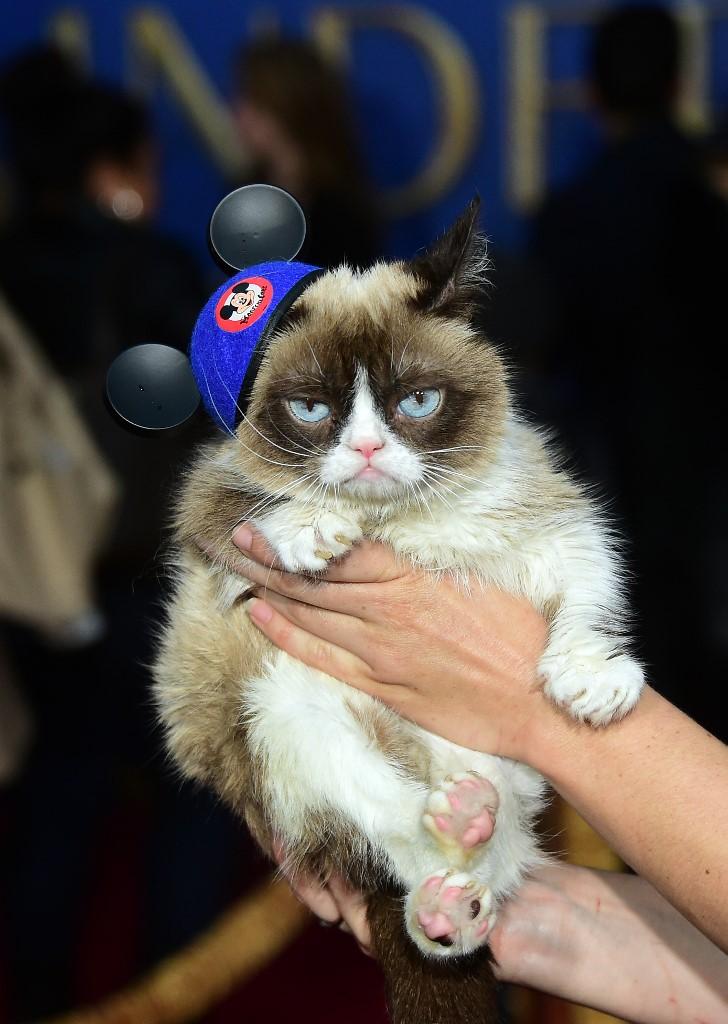 grumpy cat died
