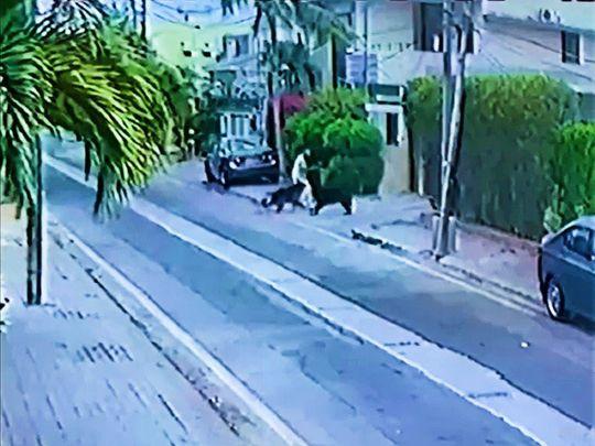 dog attack karachi
